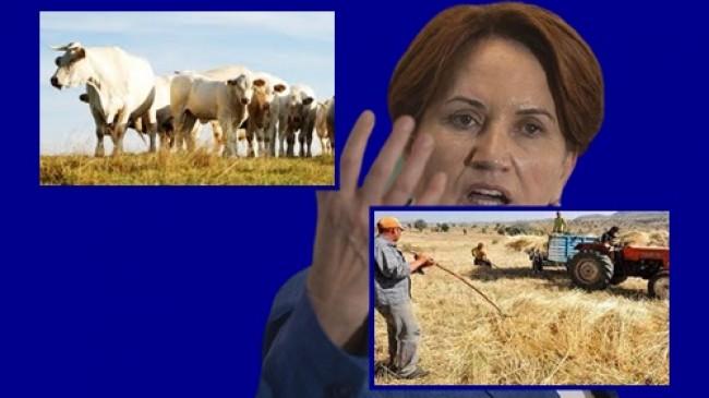 Kendi Üreticimizi Görmezden Gelip, El Alemin Çiftçisini, Besicisini Zengin Ediyorlar