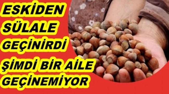 FINDIK ÜRETİCİSİ MUTSUZ VE UMUTSUZ